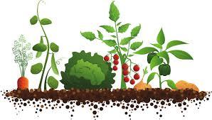 veggie rows