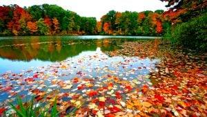 fall leave on lake